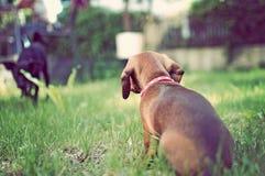 Nahaufnahmeportrait des entzückenden Welpen im Gras stockfoto