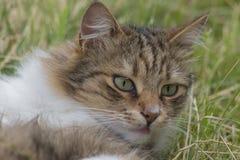 Nahaufnahmeportrait einer Katze lizenzfreie stockfotos