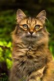Nahaufnahmeportrait einer Katze Stockbilder