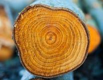 Nahaufnahmeringe des gehackten Baumstammes Stockfoto