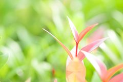 Nahaufnahmerot, Orang-Utan und grünes Blatt im Garten auf unscharfem backg Lizenzfreie Stockbilder