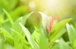 Nahaufnahmerot, Orang-Utan und grünes Blatt im Garten auf unscharfem backg Lizenzfreie Stockfotografie
