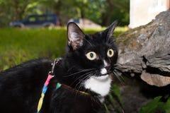 Nahaufnahmeschwarzweiss-Katze mit weit offenen gewunderten Augen in der Sonne Stockbild