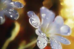 Nahaufnahmesonnenlicht Makro-bokeh Hintergrundblüte der weißen Blume Lizenzfreie Stockfotos