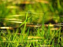Nahaufnahmespinnennetz auf dem trockenen Gras Lizenzfreies Stockfoto