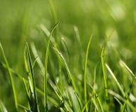 Nahaufnahmewachstumskonzept des grünen Grases Lizenzfreies Stockfoto