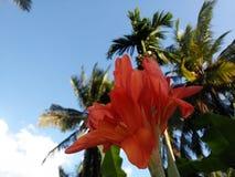 Nahaufnahmewinkelfoto von Gardning-Blumen stockbilder
