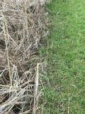 Nahaufnahmezusammenfassungsansicht des verschiedenen alten und frischen Grases der Bedingung, Frühlingszeit, Naturhintergrund stockbild