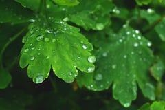 Nahe Ansicht über das frische grüne Blatt mit Wassertropfen stockfotografie