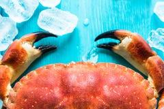 Nahe Ansicht über Krabbe claves Stockbild