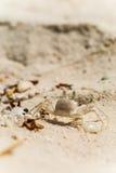 Nahe Ansicht der Krabbe auf sandigem Strand in Malediven Stockfotografie
