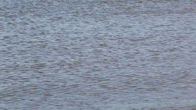 Nahe Ansicht der Meeresoberfläche stock video