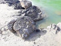 Nahe Ansicht eines Strandseitenfelsens stockbild