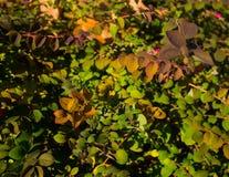 Nahe Ansicht von Blättern von verschiedenen Farben lizenzfreie stockbilder