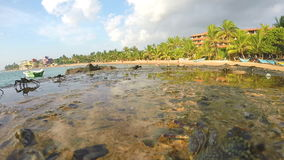 Nahe Ansicht von den Krabben, die auf Felsen an der Küste in Sri Lanka gehen stock video footage