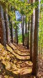 Nahe Bäume Lizenzfreie Stockfotografie