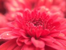 so nahe Blume Stockfoto