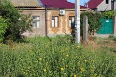 Nahe einem kleinen Haus mit einem roten mit Ziegeln gedeckten Dach wachsen Sie gelbe Blumen Lizenzfreie Stockfotos