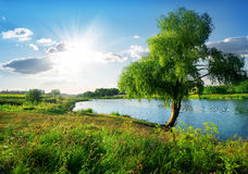 Nahe Fluss Lizenzfreies Stockbild