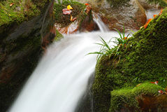 Nahe gelegene Furche-Wasserpflanze Lizenzfreie Stockfotografie