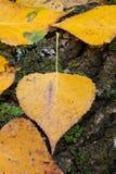 Nahe goldene Blätter im Herbst Stockbilder