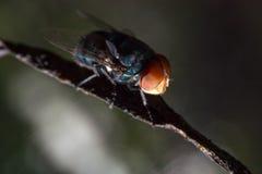 nahe hohe Fliege auf dem schmutzigen Seil innerhalb des Hauses auf der Rückseite des bokeh stockfotos