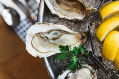 Nahe oben Draufsicht feinen Des Claire Oyster und viele Arten von den frischen Austern gedient im runden Behälter mit Scheibenzit stockfoto