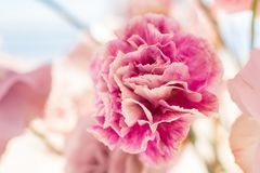 Naher hoher Blumenstrauß der frischen Gartennelke Ereignisdekoration mit frischen Blumen lizenzfreie stockbilder