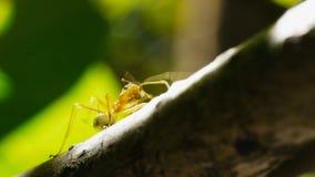 Naher hoher Schuss einer grünen Baumameise in einem tropischen Regenwald stock video