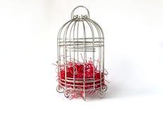 Naher Stahlvogelkäfig mit Stücken rotem Papier als Nest lokalisiert auf weißem Hintergrund als Material für Valentine Event Lizenzfreie Stockfotografie