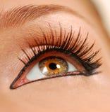 Nahes Auge der Schönheit. Stockbilder