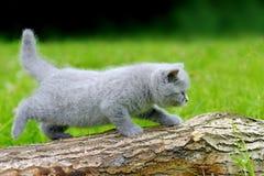 Nahes graues Kätzchen auf Baum Stockfotografie