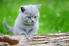 Nahes graues Kätzchen auf Baum Stockfoto