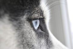 Nahes hohes Auge eines heiseren Hundes lizenzfreie stockfotografie