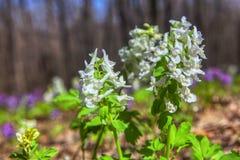 Nahes hohes Bild von Frühlingsblumen stockfoto