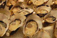Nahes hohes der Auster stockfoto
