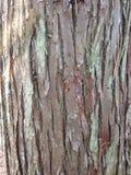 Nahes hohes der Baumrinde Lizenzfreie Stockfotos