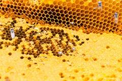 Nahes hohes der Bienenwabe Stockbilder