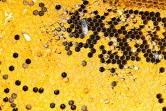 Nahes hohes der Bienenwabe Lizenzfreie Stockfotografie