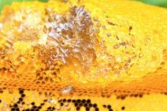 Nahes hohes der Bienenwabe Lizenzfreies Stockfoto