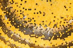 Nahes hohes der Bienenwabe Stockfotos