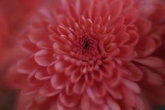 Nahes hohes der Blume Stockfoto