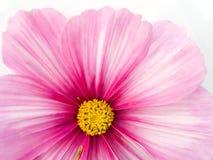 Nahes hohes der Blume Stockfotografie