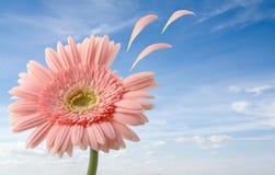 Nahes hohes der Blume Stockbild