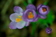 Nahes hohes der Blume lizenzfreie stockbilder