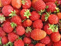 Nahes hohes der Erdbeere - Beerenhintergrund Stockbild