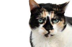 Nahes hohes der Katze Stockbild