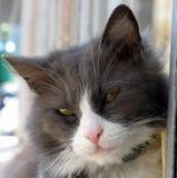 Nahes hohes der Katze Lizenzfreie Stockbilder