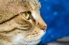 Nahes hohes der Katze Stockfotografie