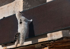 Nahes hohes der Katze Stockbilder